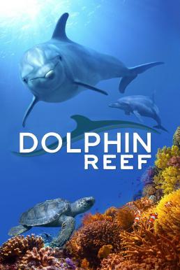 Dolphin Reef (2020) อัศจรรย์ชีวิตของโลมา